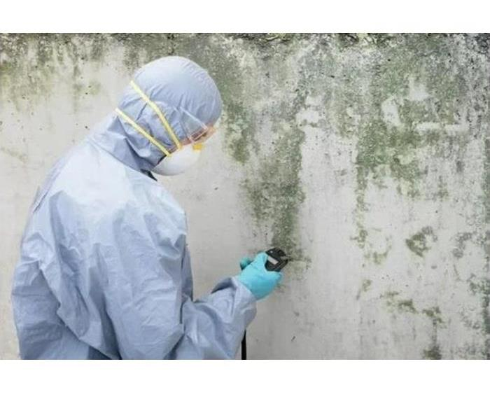Mold Remediation Specialist in Vancouver